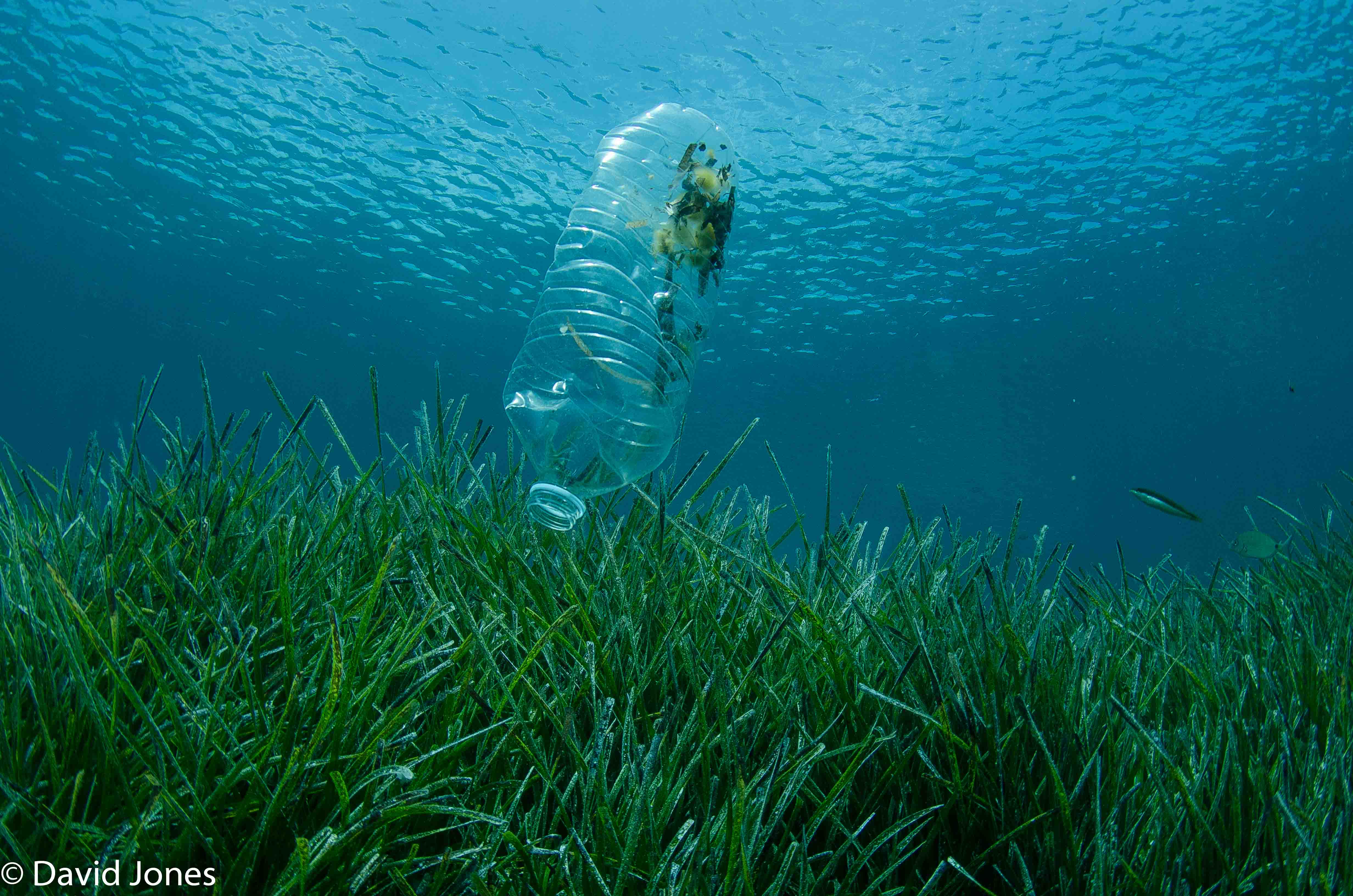 A plastic bottle floats in the ocean