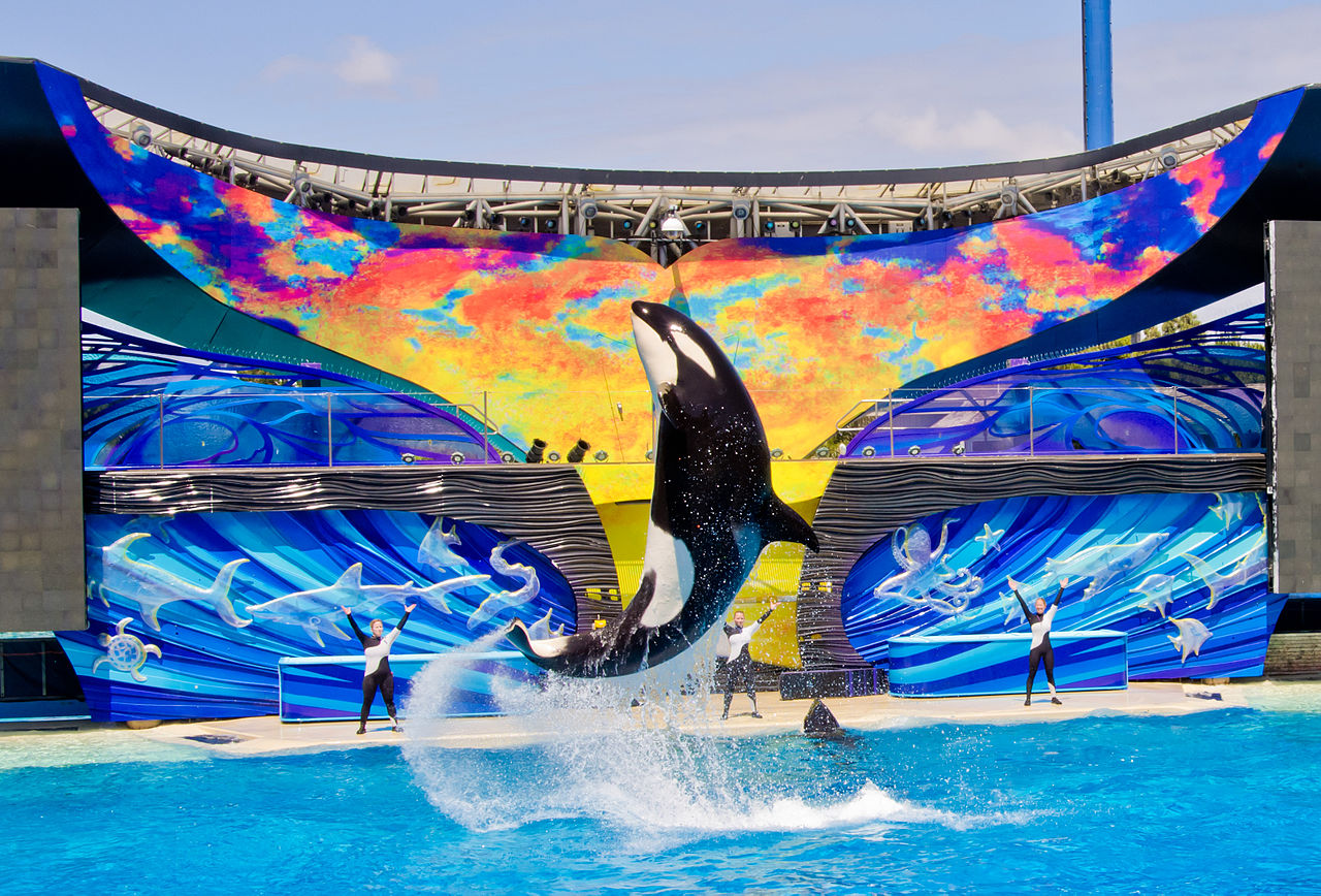 Seaworld Orca dies after 3 months