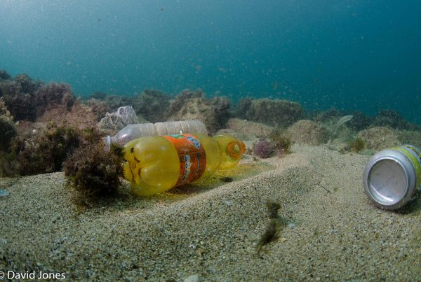 plastic pollution in the ocean