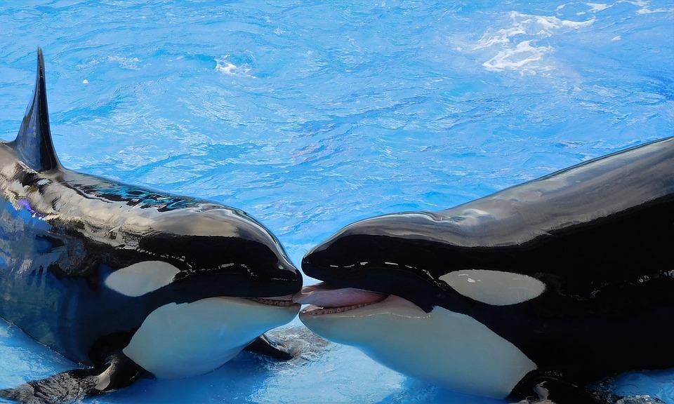 park orcas
