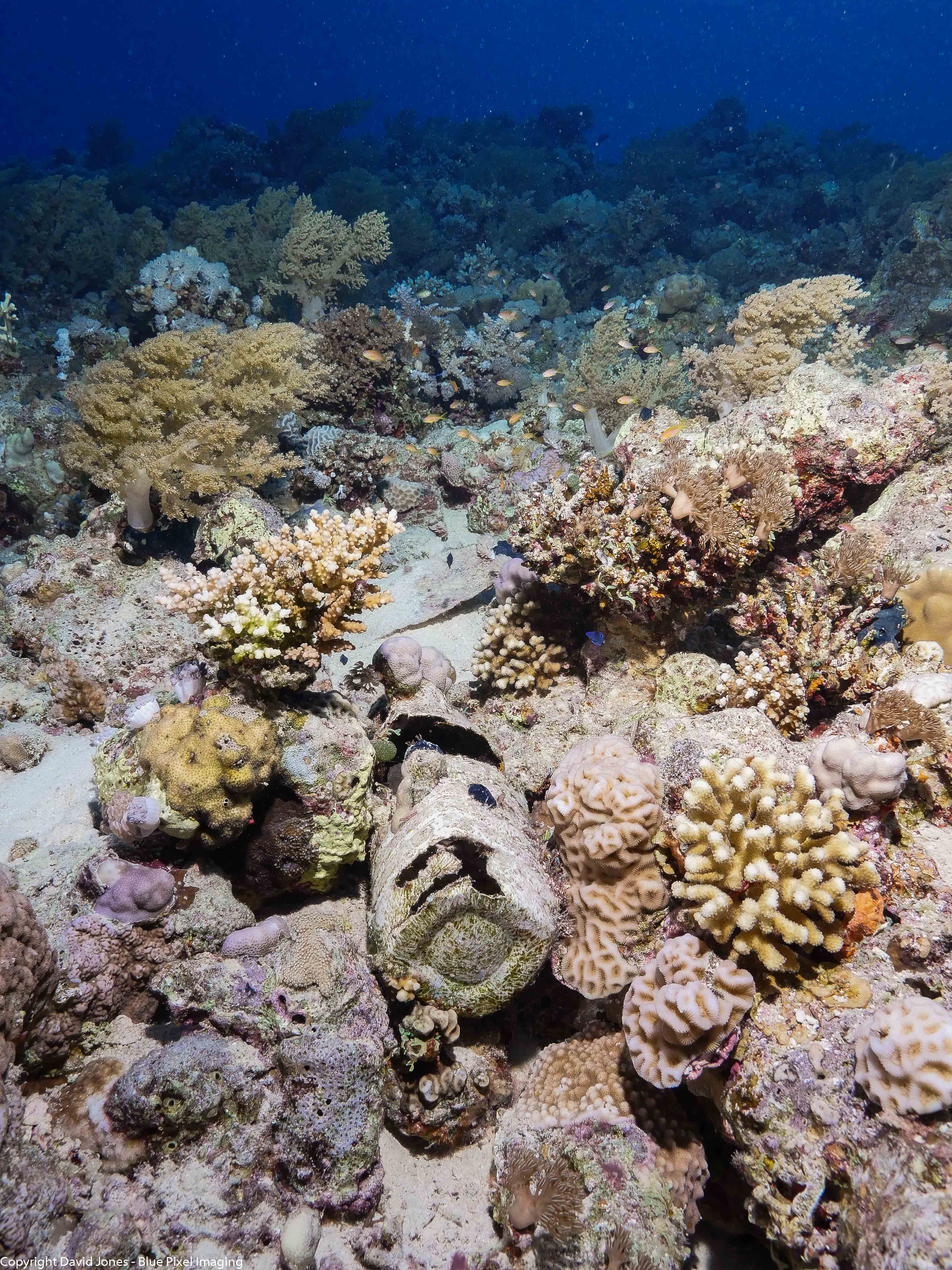 a new bottle home for coral