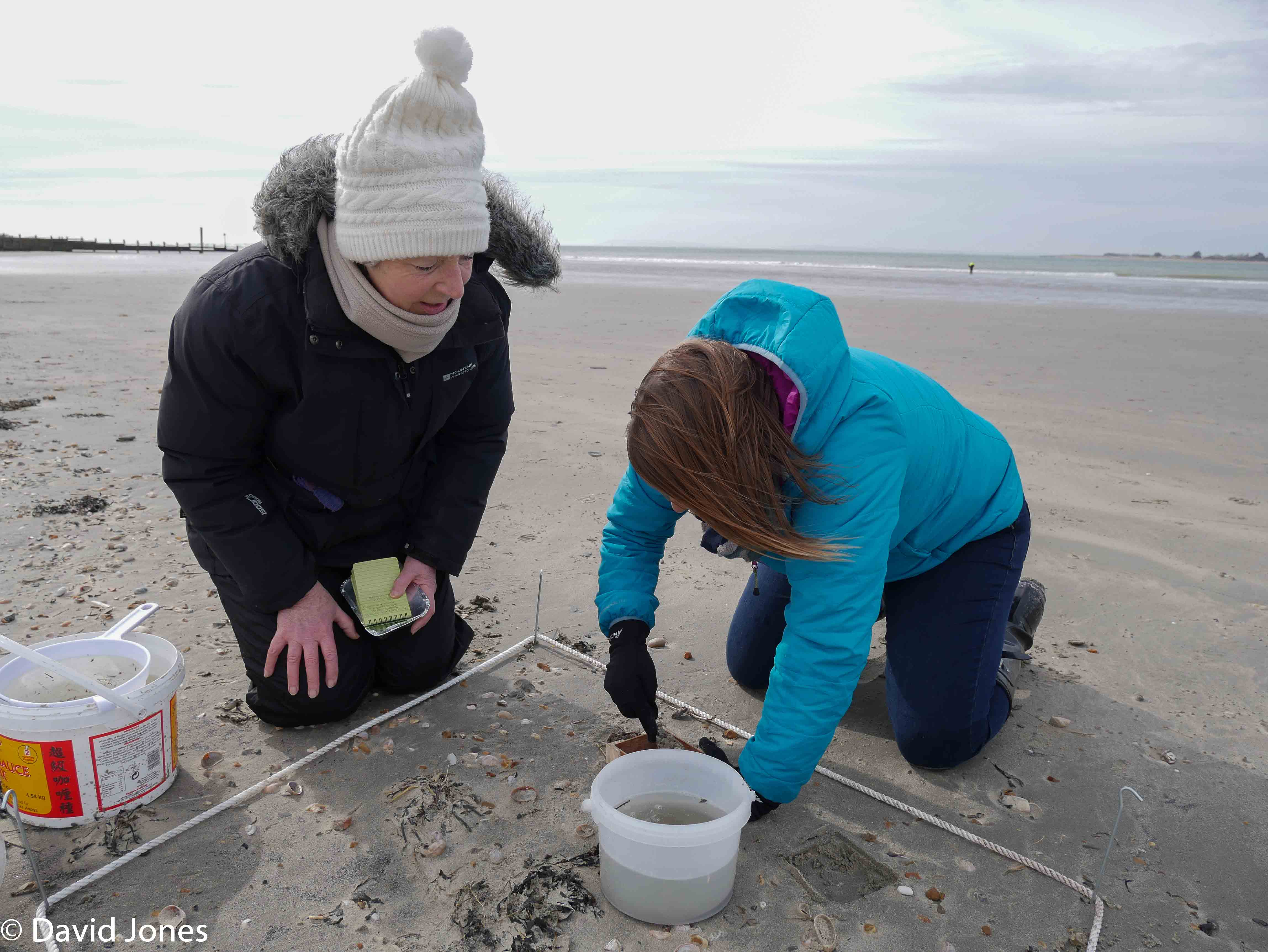 volunteers at the beach survey