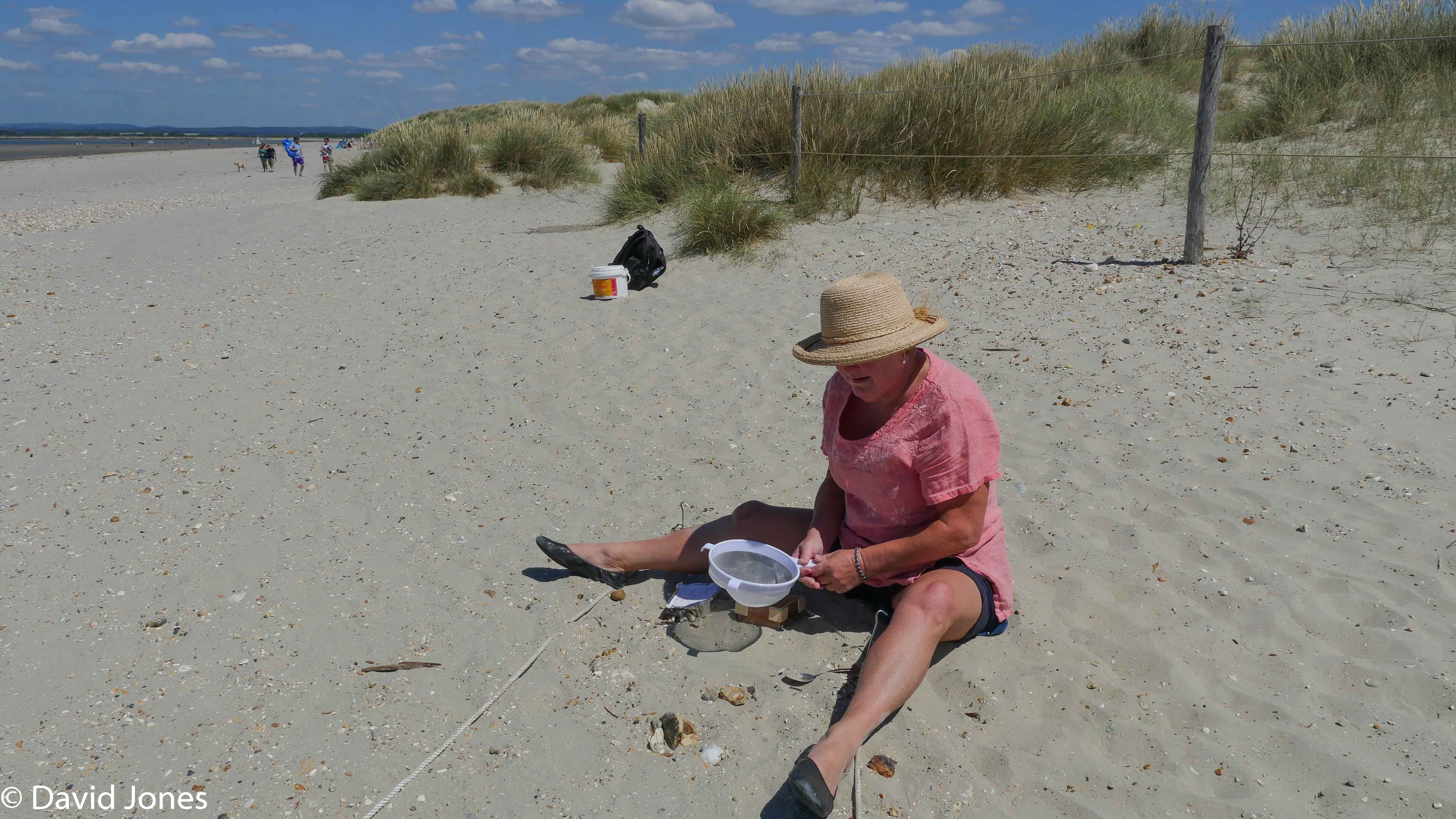 undertaking a survey on the beach with a sieve
