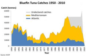 Bluefin tuna catches