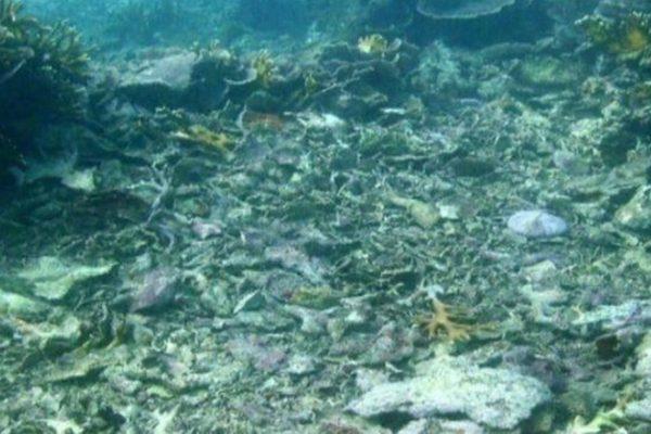 Zanzibar coral destroyed