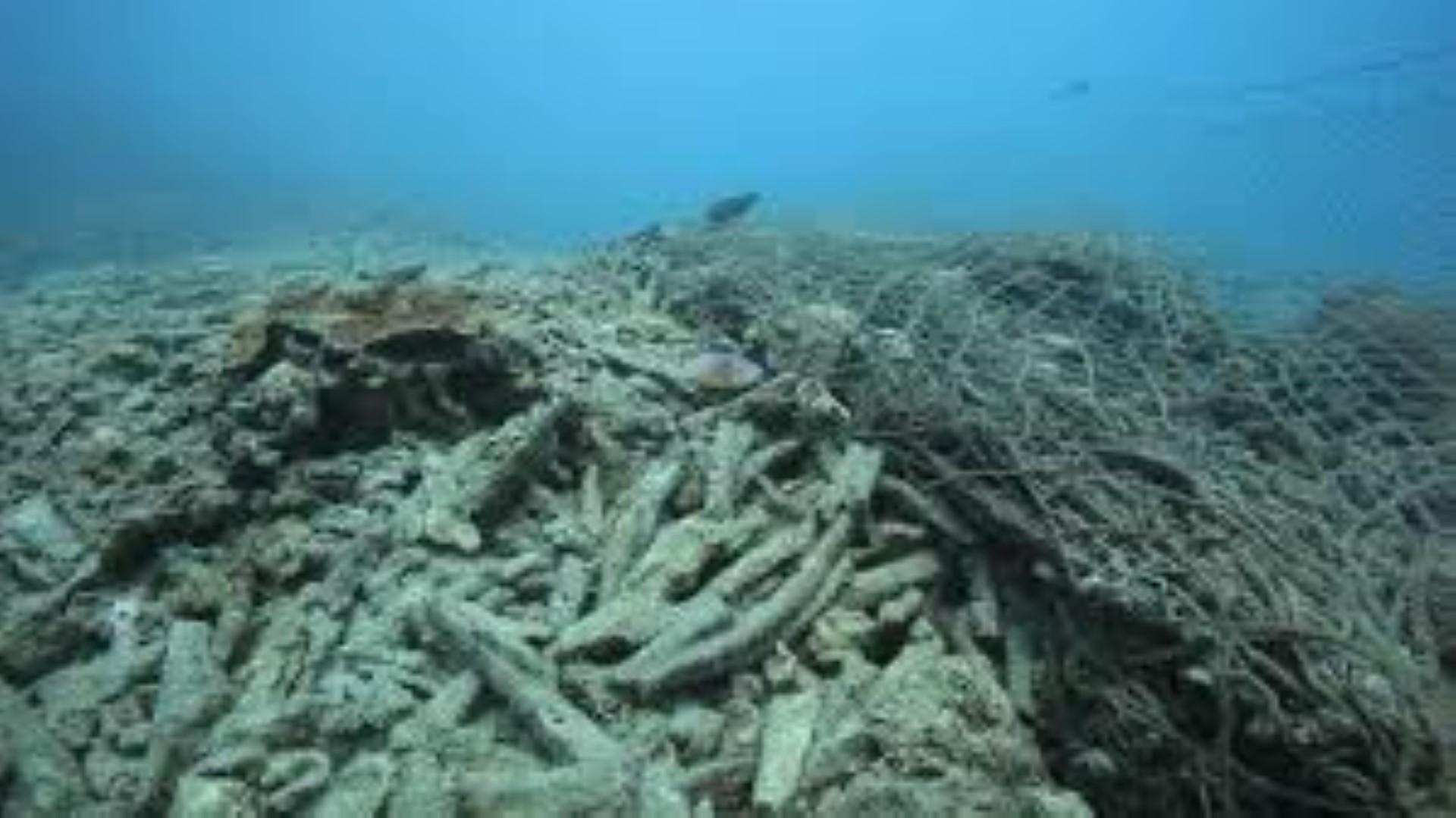 Zanzibar Ocean Protection Foundation needs your help!