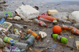 Plastic pollution floating in a river