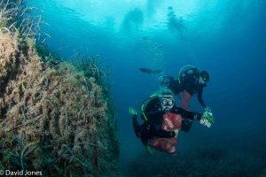 Arms full of plastic waste underwater