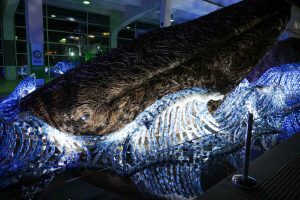 Blue Whale Model at night