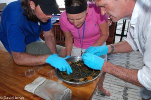 Checking results of the trawl A Plastic Ocean