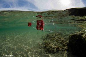 Coke bottle floats in the sea