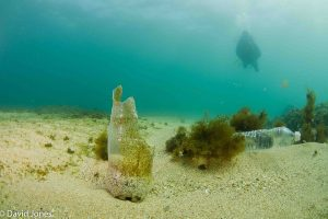 Plastic bottle on the seabed