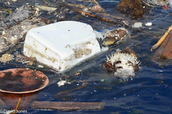 Sri Lanka - plastic pollution and dead fish