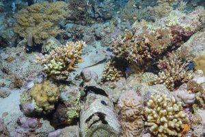 plastic bottle on the reef