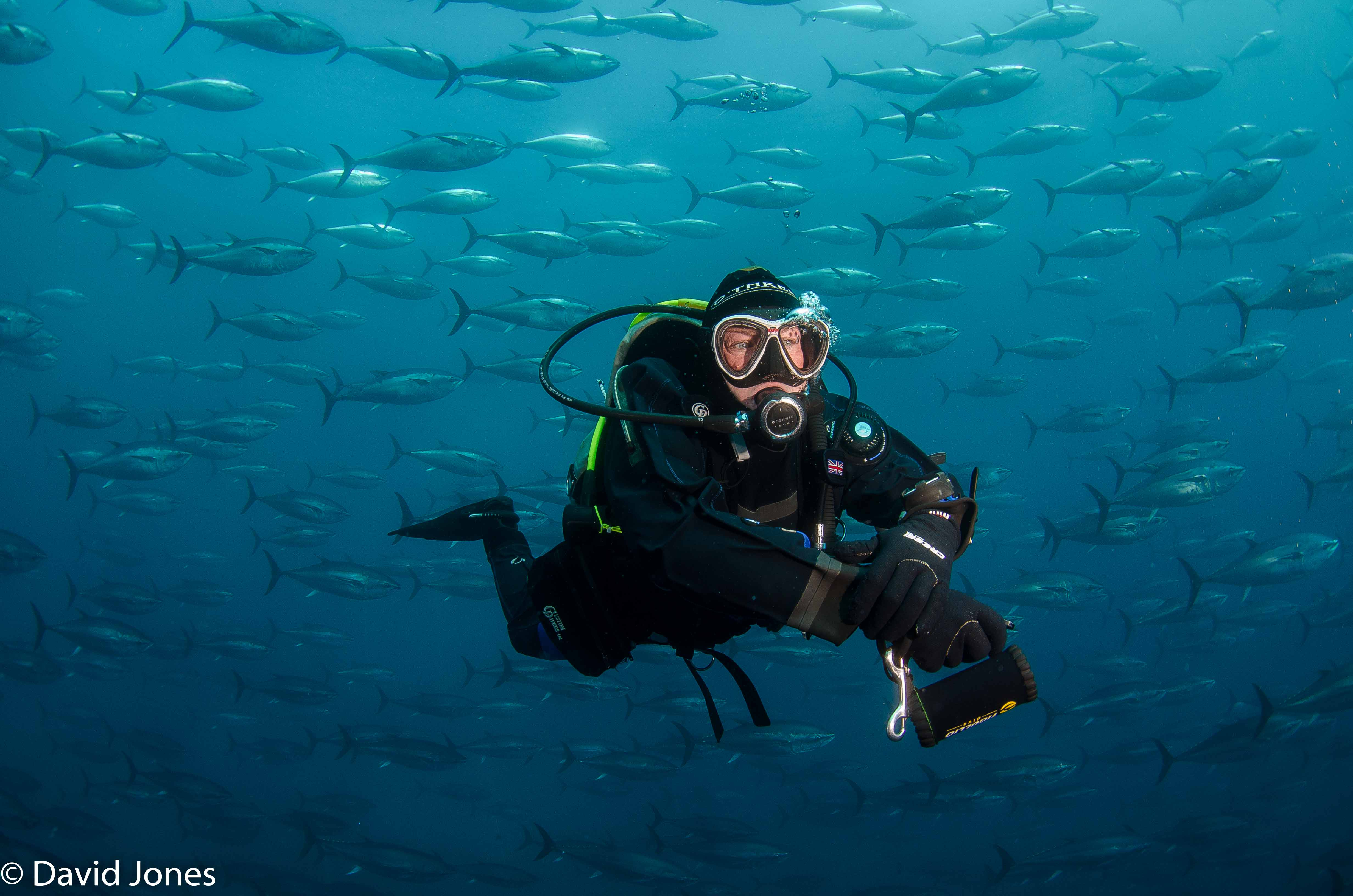 swimming with bluefin shoal