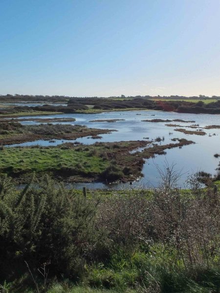 Chichester Harbour wetlands