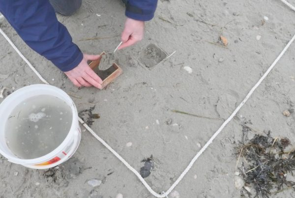 Taking samples from the beach
