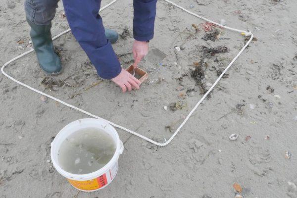 Beach survey sampling