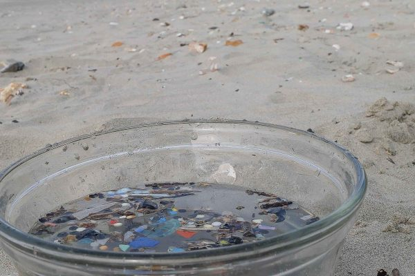 Microplastics in a bowl on the beach