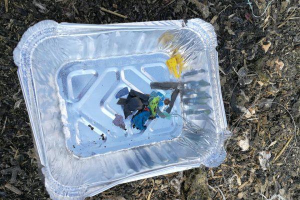 microplastics in Pinstead