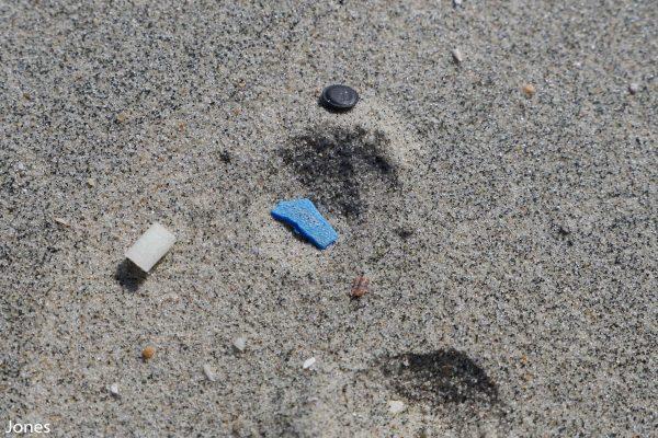 microplastics in the sand