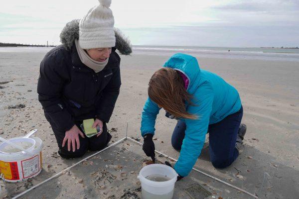 volunteers at the beach survey