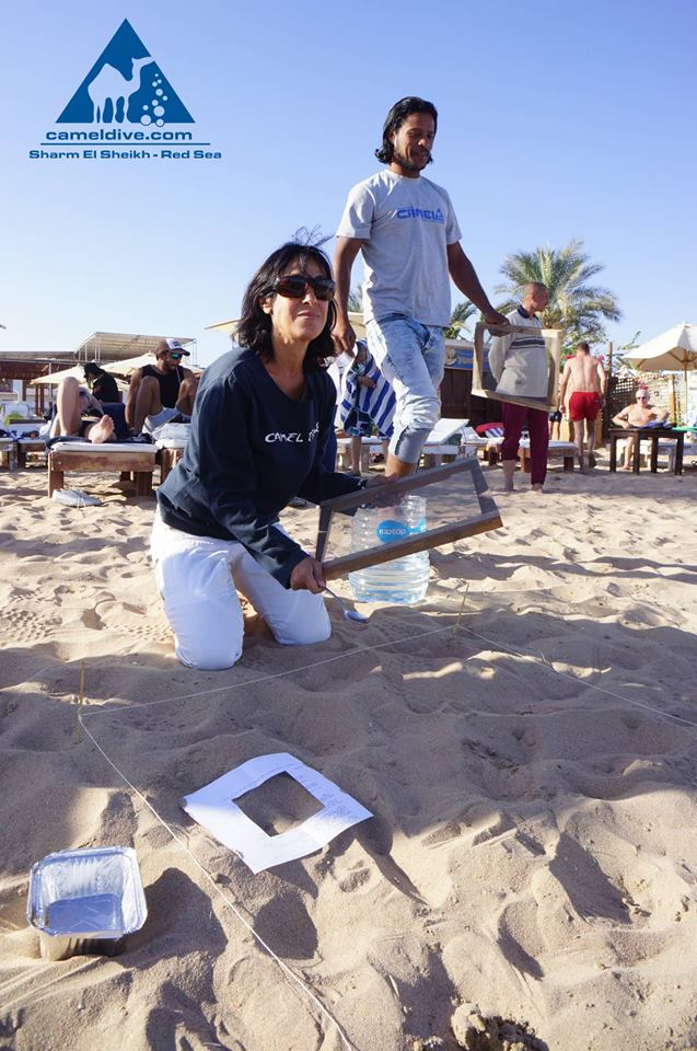 Microplastic Survey in the Red Sea