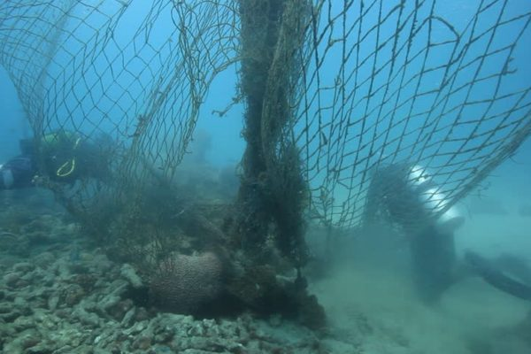 Removing old nets from Zanzibar reef