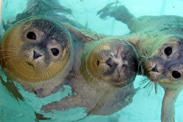 Zeehondencentrum Pieterburen seals